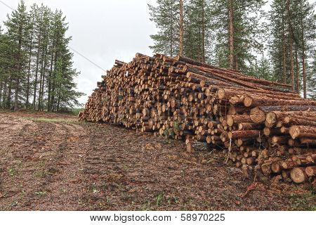 Freshly Cut Tree Logs