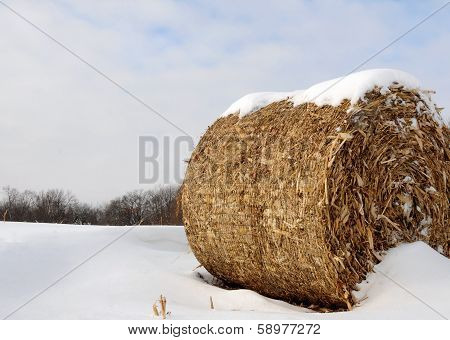 Round bale of corn stalks in snow