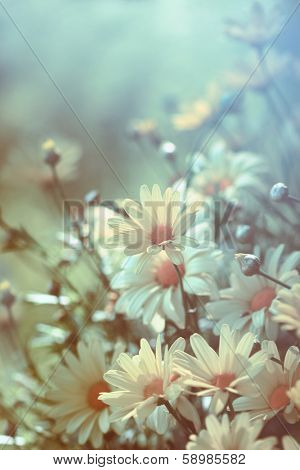Yellow daisies with soft filtered light