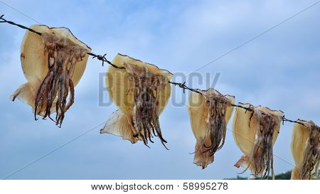 Octopus Drying On Barbwire