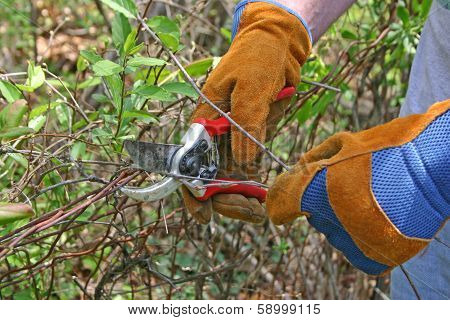 Pruning Small Branches