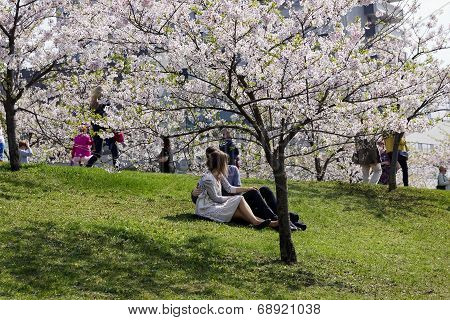 A Loving Couple Sittings  Under The  Japanese Blossoms Cherry