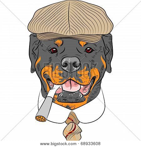 Vector Funny Cartoon Hipster Dog Rottweiler