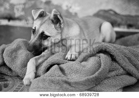 Dog Shelter in Opole Poland, sad dog. poster
