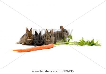 Bunnies And A Carrot
