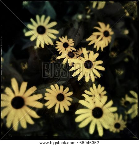 A typical stock photo image of flowers with an Instagram filter