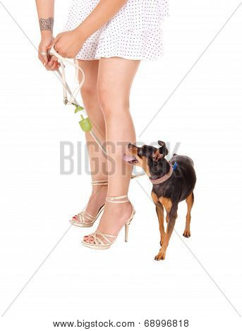 Woman's Legs With Dog.