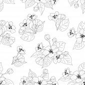 Seamless floral pattern, apple tree flowers, set black contours isolated on white background. Vector poster