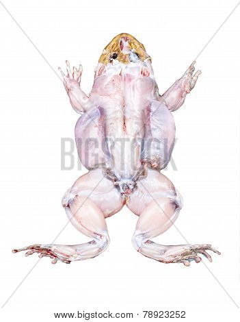Frog Top View With Muscles Isolated On White
