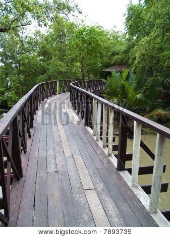Wood Bridge In Mangrove Forest