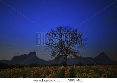 Night Photgraphy Of Sunflowers Field And Dry Tree Branch Against Star Light On Blue Sky