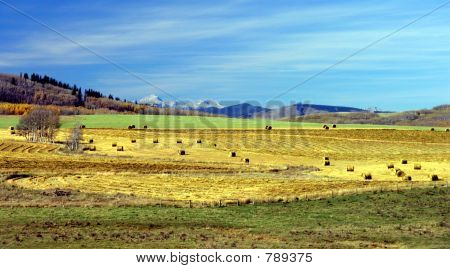 Rural Fall Portrait