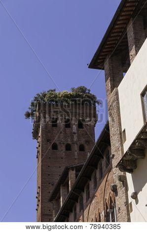 Tower Of Palazzo Guinigi In Lucca