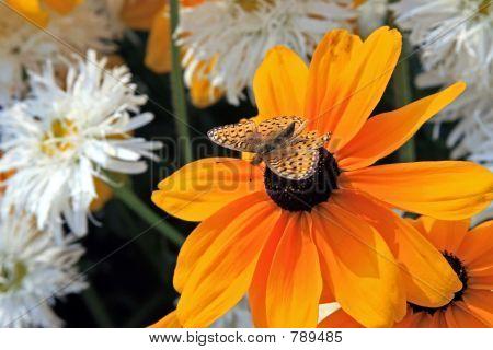 Butterfly Orange on Orange