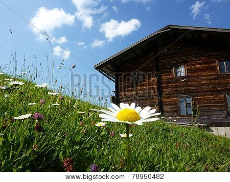 Flower meadow and mountain refuges