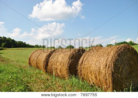 Hey Stacks In A Field