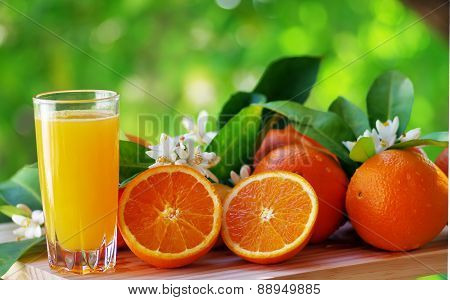 Orange juice in glass blossom and slice of oranges