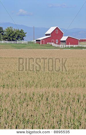 Rural farming scene