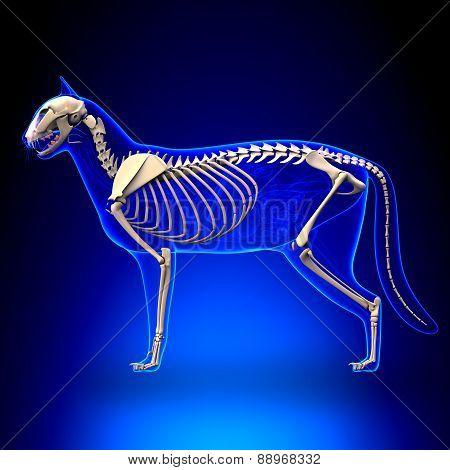 Cat Skeleton Anatomy - Anatomy Of A Cat Skeleton