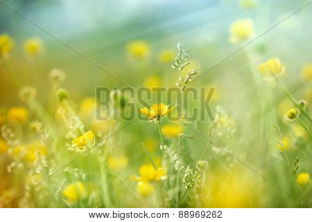 Meadow flowers lit by sun ray in spring