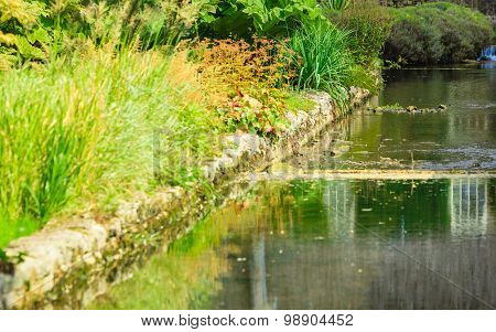 River With Green Plant On The Shore