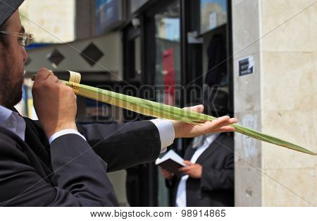 Bnei Brak - September 22: An orthodox Jew chooses ritual plant Lulav before Sukkot September 22, 2010 in Bnei Brak, Israel