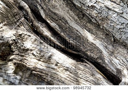 Bark of an olive tree