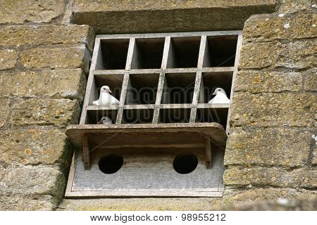 Doves in a dovecote built into wall