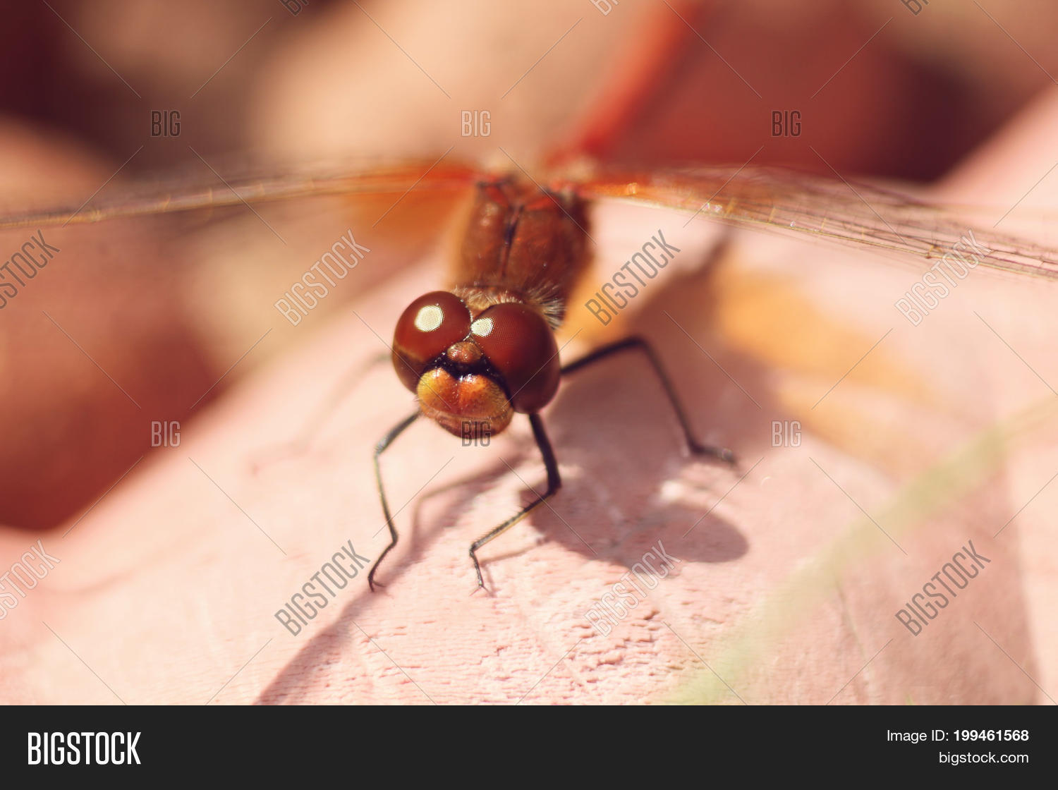Brown Dragonfly Onin Image Photo Free Trial Bigstock Use Selective Focus In Macro Photography For Dummies A Garden