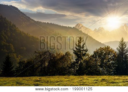 Spruce forest on the hillside meadow in High Tatras mountain ridge. Gorgeous scenery mountainous scenery in early autumn at sunset