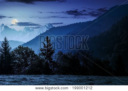 Spruce forest on the hillside meadow in High Tatras mountain ridge. Gorgeous scenery mountainous scenery in early autumn at night in full moon light