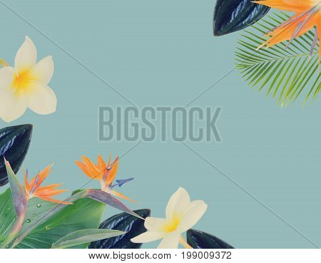 tropical flowers and leaves - borders of fresh frangipani and strelizia flowers and exotic palm leaves on blue backgroundotic palm leaves on blue background