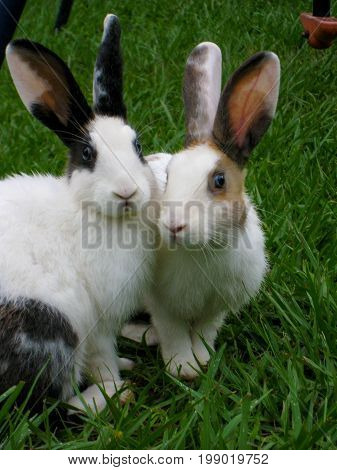 Two rabbits in a garden side by side