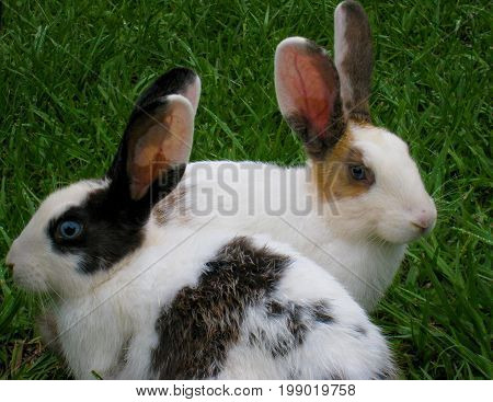 Two rabbits in a garden side by side, staring at different directions
