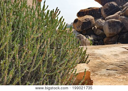 Landscape with big stones - unique mountain formation with tropical plants, Hampi, Karnataka, India.