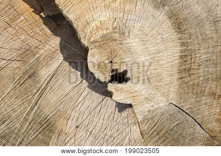 a background of a wooden cut texture