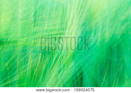 Blurred Green Abstract Background With A Predominance Of Lines