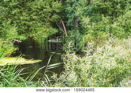 A small quiet river flows calmly between overgrown shores