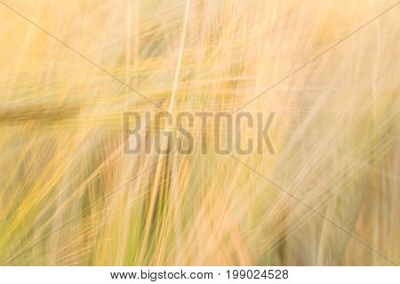Blurred Yellow Abstract Background With A Predominance Of Lines