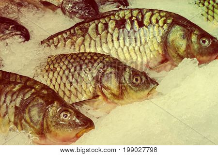 Fresh Fish On Ice In The Market. Seafood, Non-gmo And Chemistry.