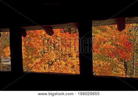 Looking out into Fall in Brown County State Park in Indiana