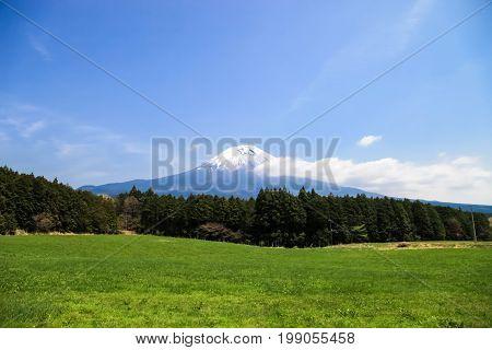 Beautiful Mount Fuji japan. Mount Fuji with green field and blue sky.