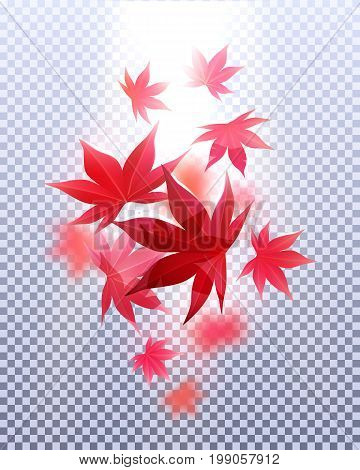 Momiji. Realistic autumn maple leaves. Vector illustration design template element.