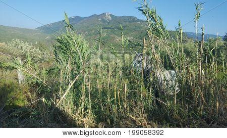 Photo on mountains near Salerno, Horse hidden behind plants