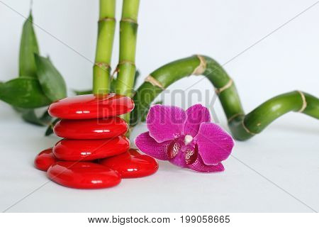 Red pebbles arranged in zen lifestyle with a two-tone orchids on the right side of the bamboo straight and twisted all on a white background