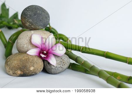 Pebbles gray natural arranged in lifestyle zen with a two-tone orchid, on the right side of the bamboos twisted on white background