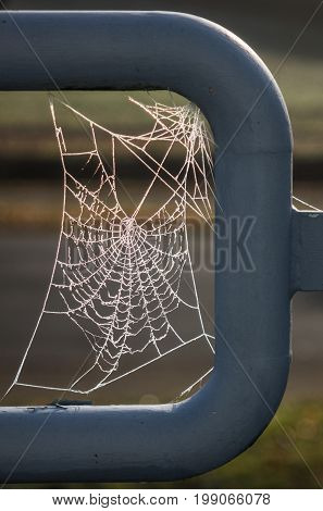 The Spiderweb And Frost In A Sunlight