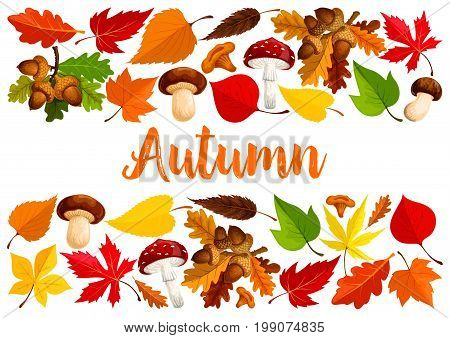 Autumn poster template of nature tree leaf fall and seasonal mushrooms amanita and forest cep. Vector design of oak acorn, falling leaves of maple, aspen or elm and poplar for autumn greeting card