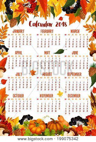 Autumn calendar 2018 template poster of falling maple, oak, aspen and rowan tree leaf with acorn, amanita or cep mushrooms and rowanberry, pumpkin or rowan berry harvest, fir and pine cones