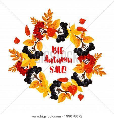 Autumn Big Sale poster template for seasonal shopping discount promo design. Vector wreath of rowanberry harvest, autumn foliage of maple, poplar or birch and aspen tree leaf or oak acorn